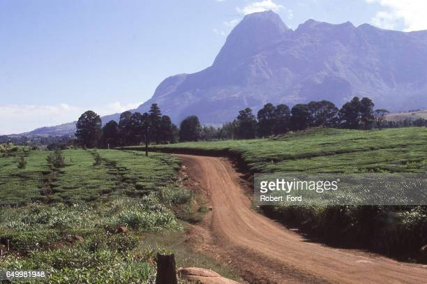 Dirt road through tea plantation in southern Malawi Africa with the Mulanje Massif a major batholith in the distance Malawi Africa