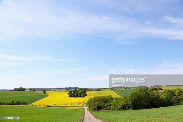 Schotterstrecke und Gelb grüne Felder mit Gruppen von Bäumen