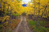 Dirt track through autumnal aspen forest, Canada