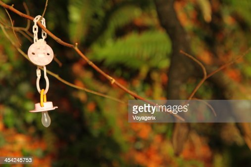 Dirty baby pacifier hanging outside in branch : Stock Photo
