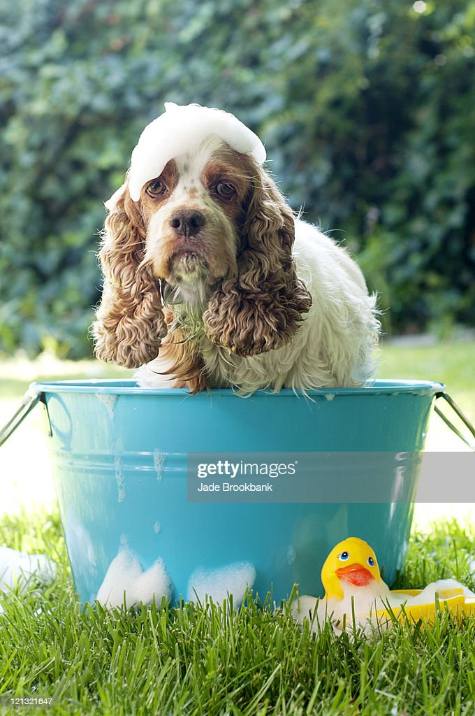 Dirty dog in washtub : Stock Photo