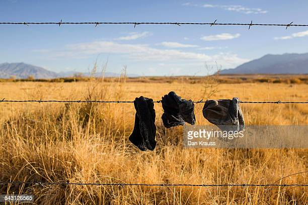 Dirty Socks hangin on a fence.