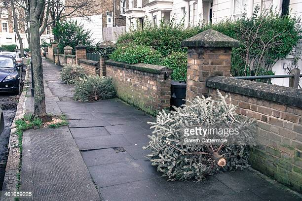 Discarded Christmas trees line the road in Angel on January 8 2014 in London England In the lead up to Christmas a pine tree is the centre point of a...