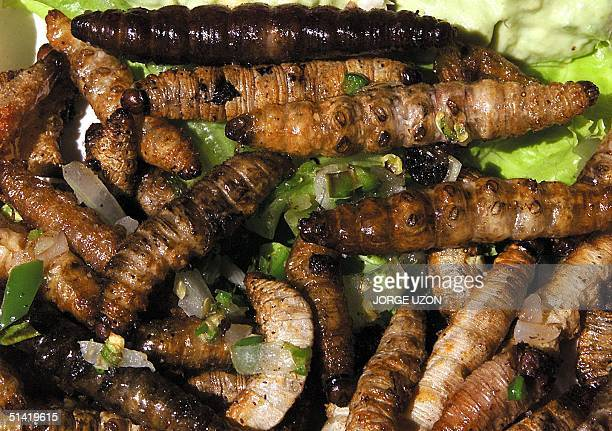 A dish of sauteed maggot a typical Mexican delicacy is photographed at Girasoles Restaurant in Mexico City 19 October 2001 Maggots grasshoppers and...