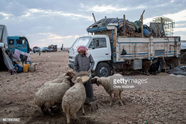 A displaced man feeds his sheep next to his truck filled with household and salvaged items at a camp for internally displaced people on October 29...