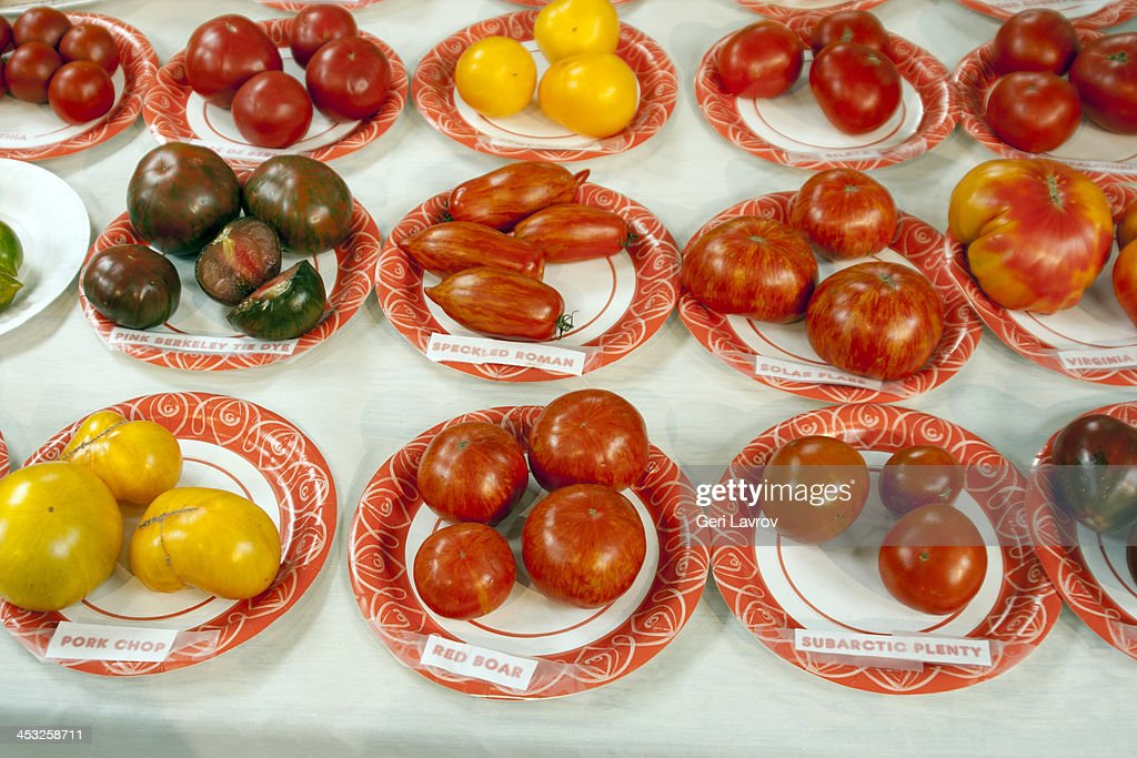 Display of different type of tomato varieties : Stock Photo