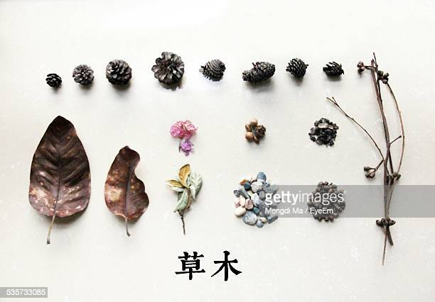 Display Of Dry Leaves With Pebbles And Pine Cones Over White Background