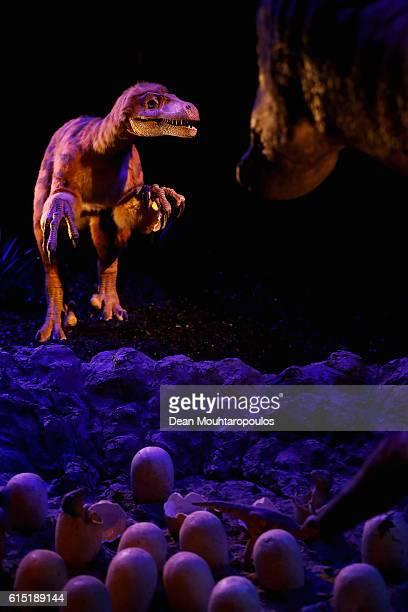 A display of the Deinonychus antirrhopus a genus of carnivorous dromaeosaurid coelurosaurian dinosaurs and the Tenontosaurus a genus of ornithopod...