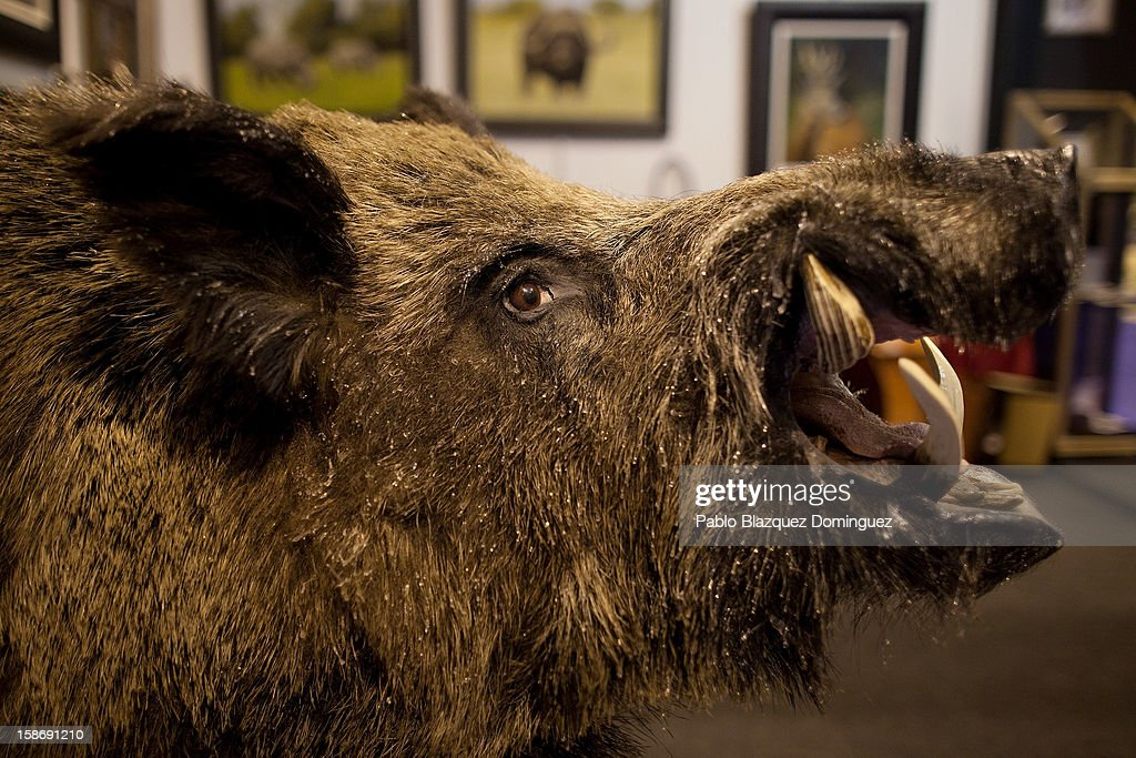 A dissected wild boar is on display at a shop during Madrid Horse Week Fair at Ifema on December 23, 2012 in Madrid, Spain.