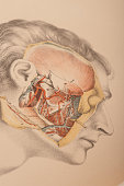 Dissection of the pterygoid region the muscles of mastication the internal maxilllary artery jaw and nerves 1882 From 'Illustrations of Dissections...