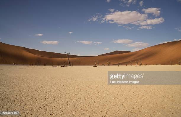 Distant dead trees on clay pan, Deaddvlei, Sossusvlei National Park, Namibia