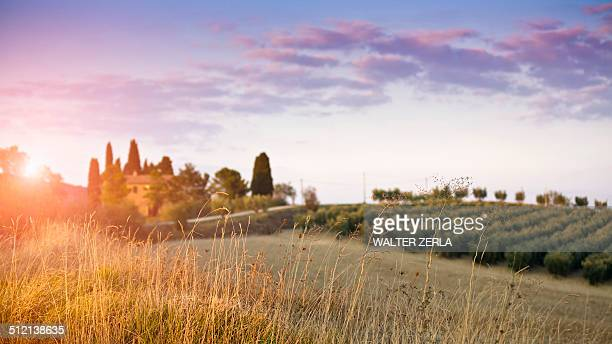 Distant view of vineyard, Volterra, Tuscany, Italy