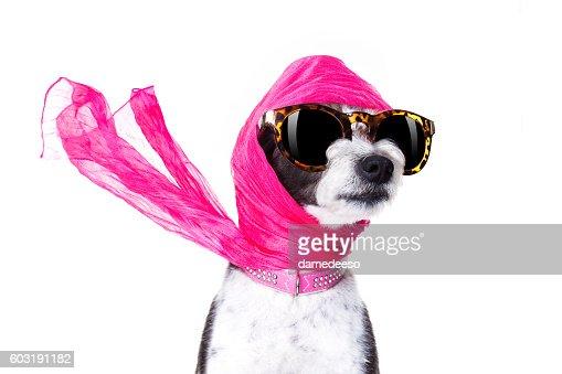 diva chic dog : Photo
