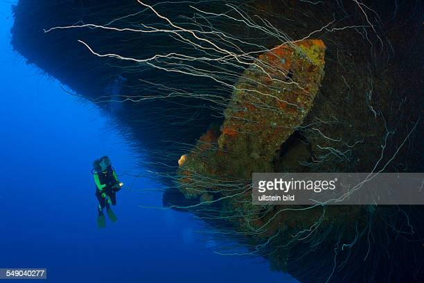 Diver and Anchor at Bow of Aircraft Carrier USS Saratoga Marshall Islands Bikini Atoll Micronesia Pacific Ocean
