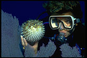 Diver and Porcupinefish