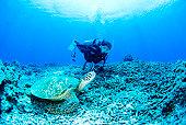 Diver and sea turtle underwater