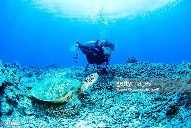 Diver and sea turtle underwater
