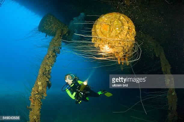 Diver at massive 16inch 45 Caliber Gun under the HIJMS Nagato Battleship Marshall Islands Bikini Atoll Micronesia Pacific Ocean