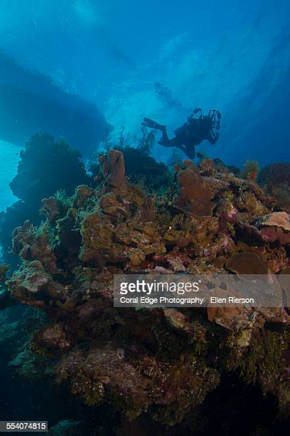 Diver descending from boat on little Cayman