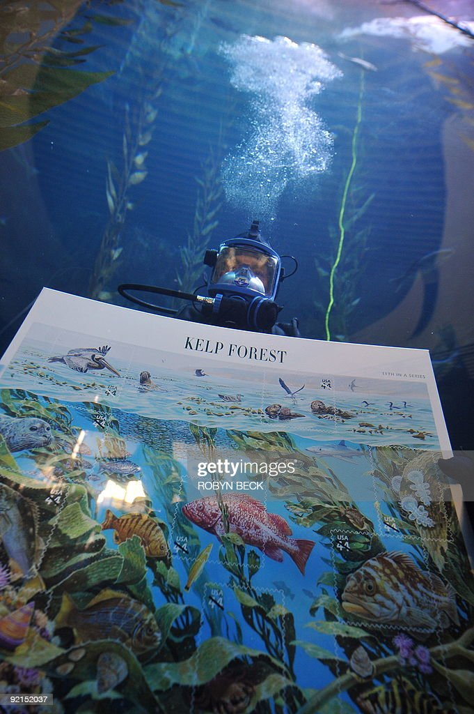 A diver displays the US Postal Service�s newest 44-cent First-Class postage stamps called 'Nature of America: Kelp Forest,' during an underwater presentation ceremony in the 142 thousand gallon Blue Cavern tank exhibit at the Aquarium of the Pacific in Long Beach, California on October 21, 2009 The stamps, part of the Postal Service's 'Nature of America' series went on sale on October 1st across the country. AFP PHOTO / Robyn Beck