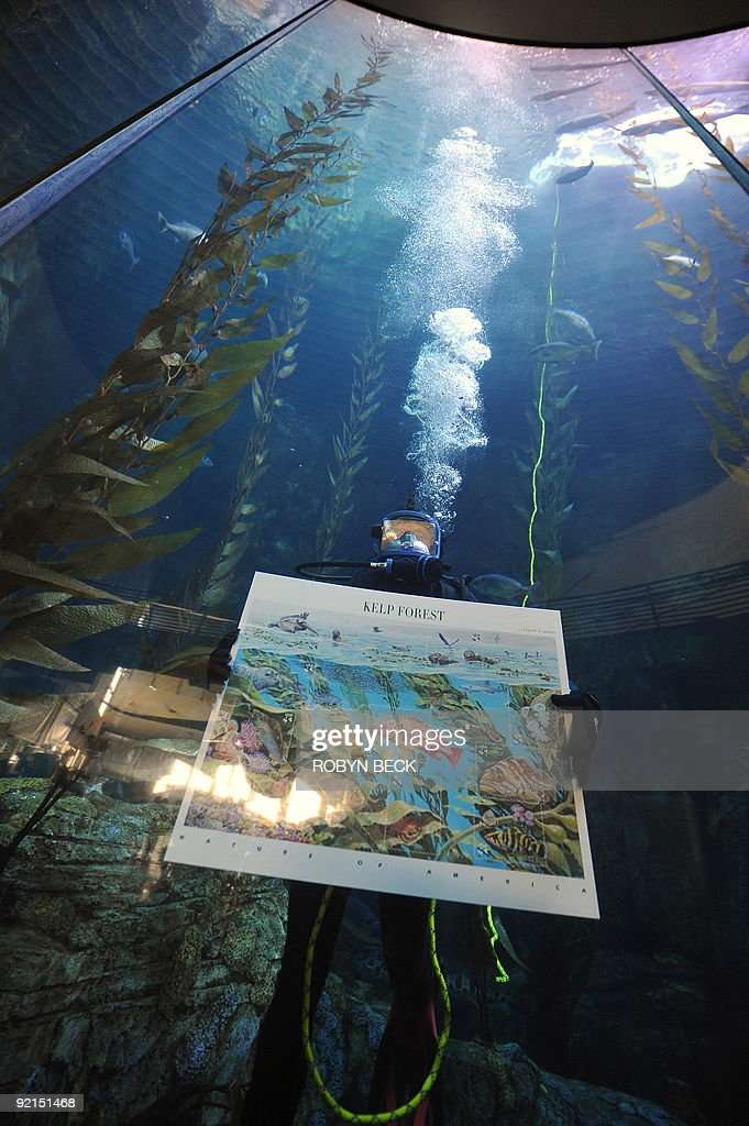 A diver displays the US Postal Service�s newest 44-cent First-Class postage stamps featuring the 'Nature of America: Kelp Forest,' during an underwater presentation ceremony in the 142 thousand gallon Blue Cavern tank exhibit at the Aquarium of the Pacific in Long Beach, California on October 21, 2009 The stamps, part of the Postal Service's 'Nature of America' series went on sale on October 1st across the country. AFP PHOTO / Robyn Beck