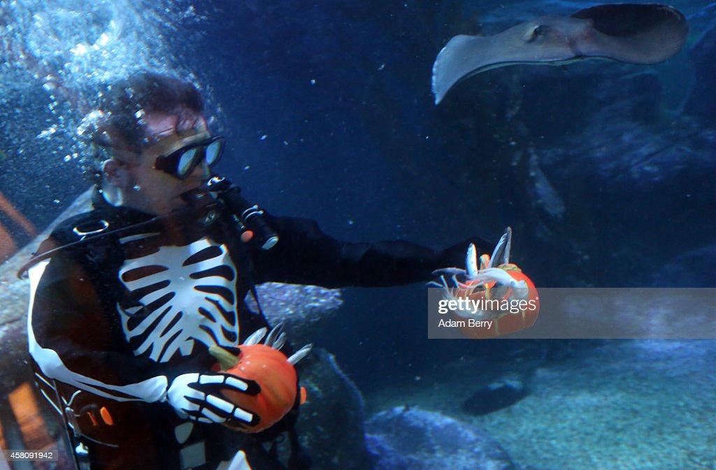 A diver dressed as a skeleton feeds fish out of a jacko'lantern to rays and sharks in a Halloweenthemed aquarium at the SEA LIFE AquaDom attraction...