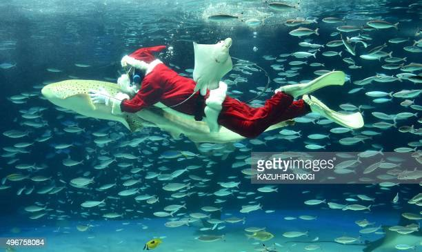 A diver dressed in a Santa Claus costume swims with fish at the Sunshine Aquarium in Tokyo on November 12 2015 The aquarium is holding the Christmas...