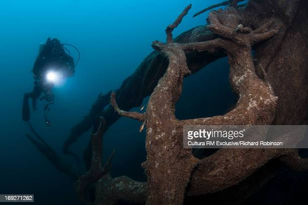 Diver examining tree underwater