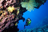 Diver Exploring Coral Cave. Australia