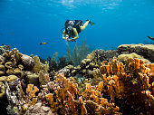 shallow part of coral reef around Curaçao /Netherlands Antilles