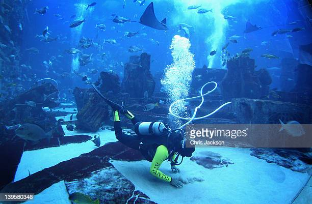 A diver 'hoovers' the giant tank at Atlantis the Palm Hotel of fish deposits on February 23 2012 in Dubai United Arab Emirates The 11million litre...