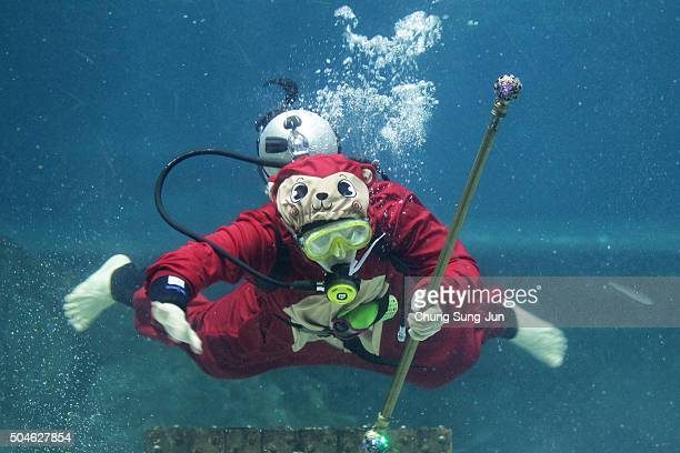 A diver in a Monkey costume swims at the Coex Aquarium on January 12 2016 in Seoul South Korea The year of 2016 is the year of the monkey according...