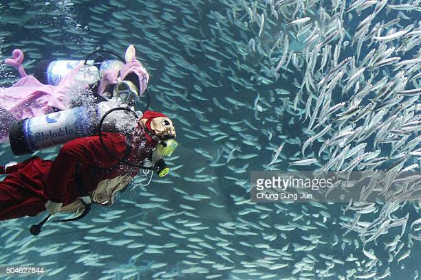 A diver in a Monkey costume swims with sardines at the Coex Aquarium on January 12 2016 in Seoul South Korea The year of 2016 is the year of the...