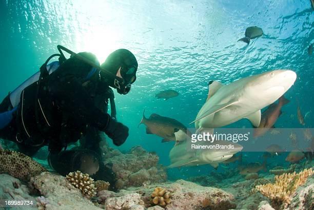 Taucher in der Nähe von zwei sharks