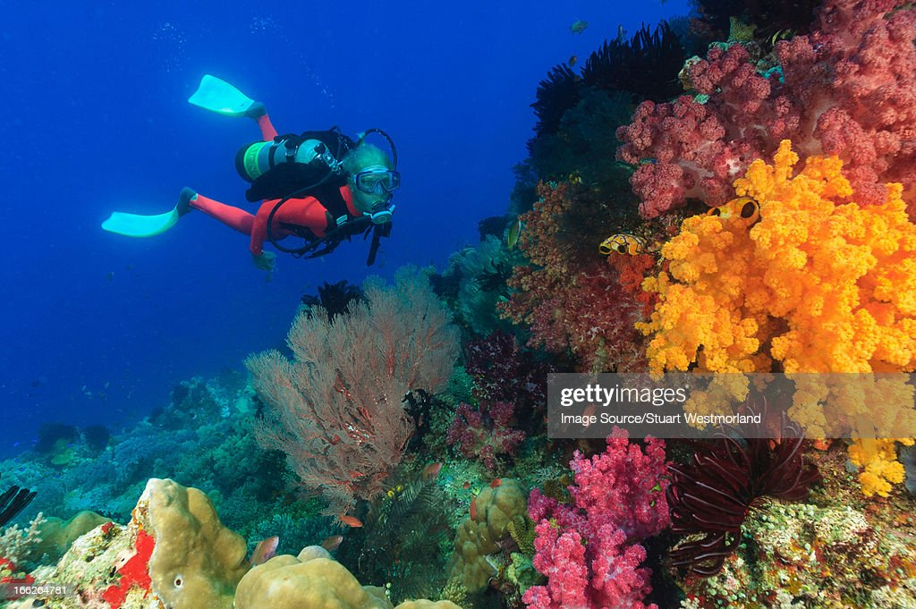 Diver swimming in coral reef : Stock Photo
