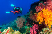 Diver swimming in coral reef