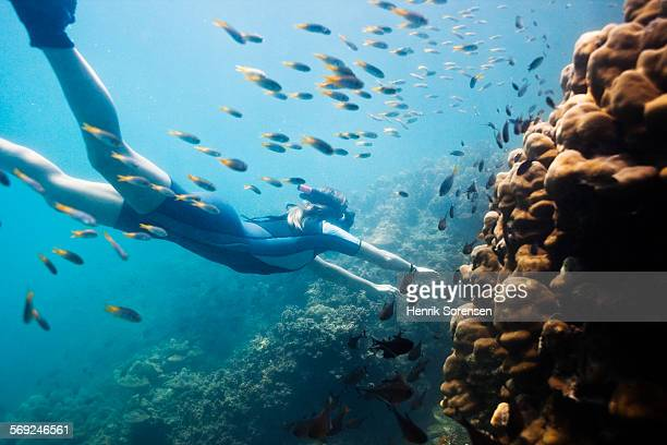 Diver swimming with a school of fish