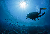 Diver swims in the Red Sea in Egypt.
