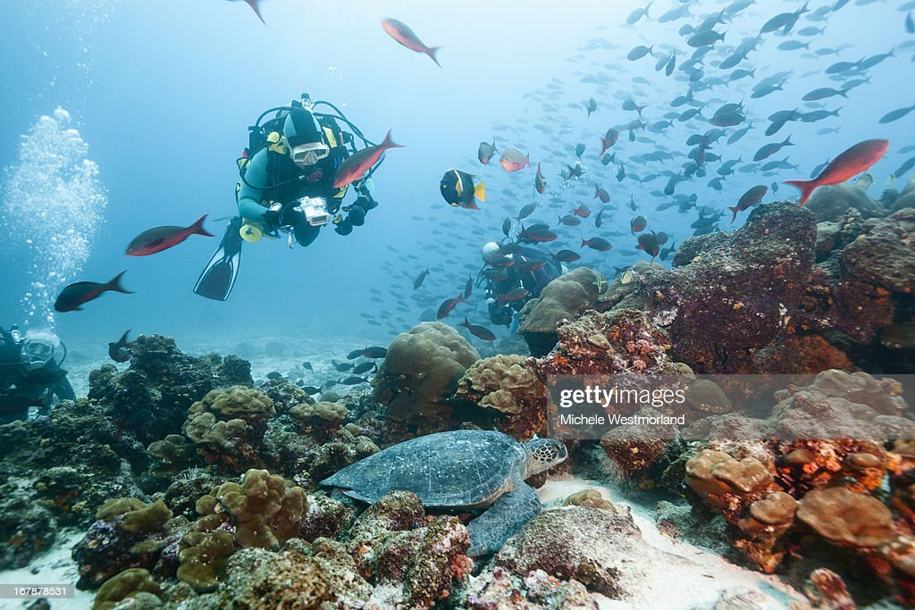 Diver Viewing Green Sea Turtle, Galapagos Islands.