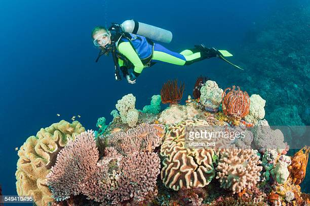 Diver watches Biodiversity on Coral Reef Raja Ampat West Papua Indonesia