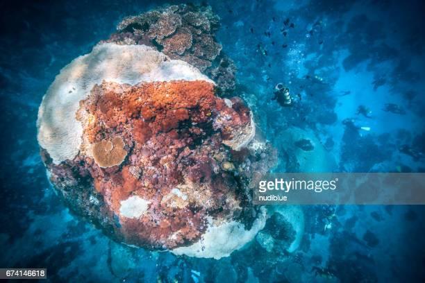diver watching big coral