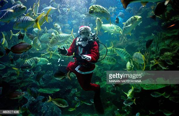 A diver wearing a Santa Claus outfit feeds fish inside a tank at the Aquaria KLCC in Kuala Lumpur on December 16 2014 The scubadiving Santa Claus...