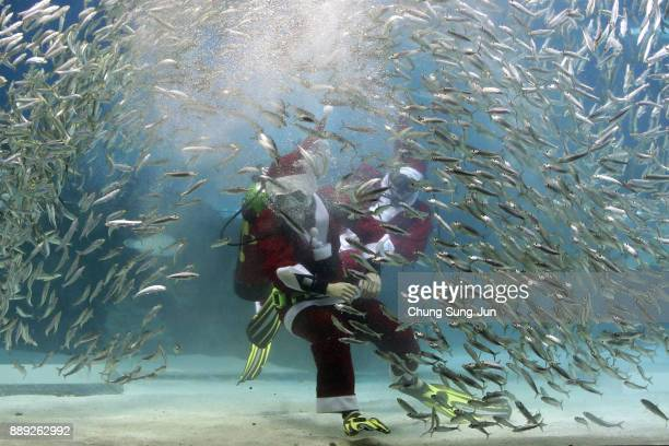 A diver wearing Santa Claus costume swims in the tank at COEX Aquarium on December 10 2017 in Seoul South Korea