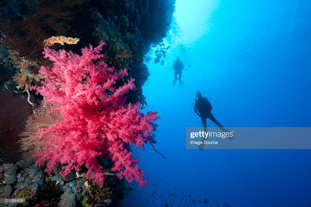Divers alongside coral wall : Stock Photo