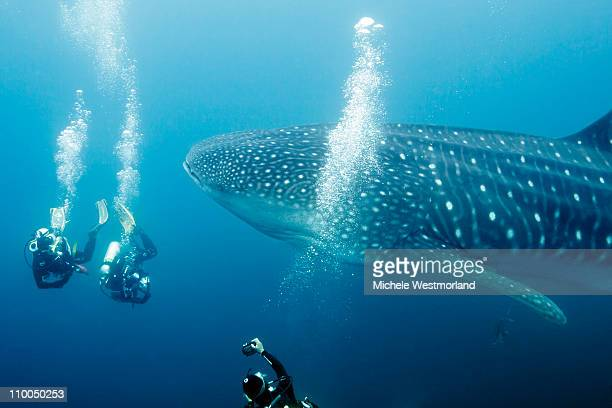 Divers and Whale Shark
