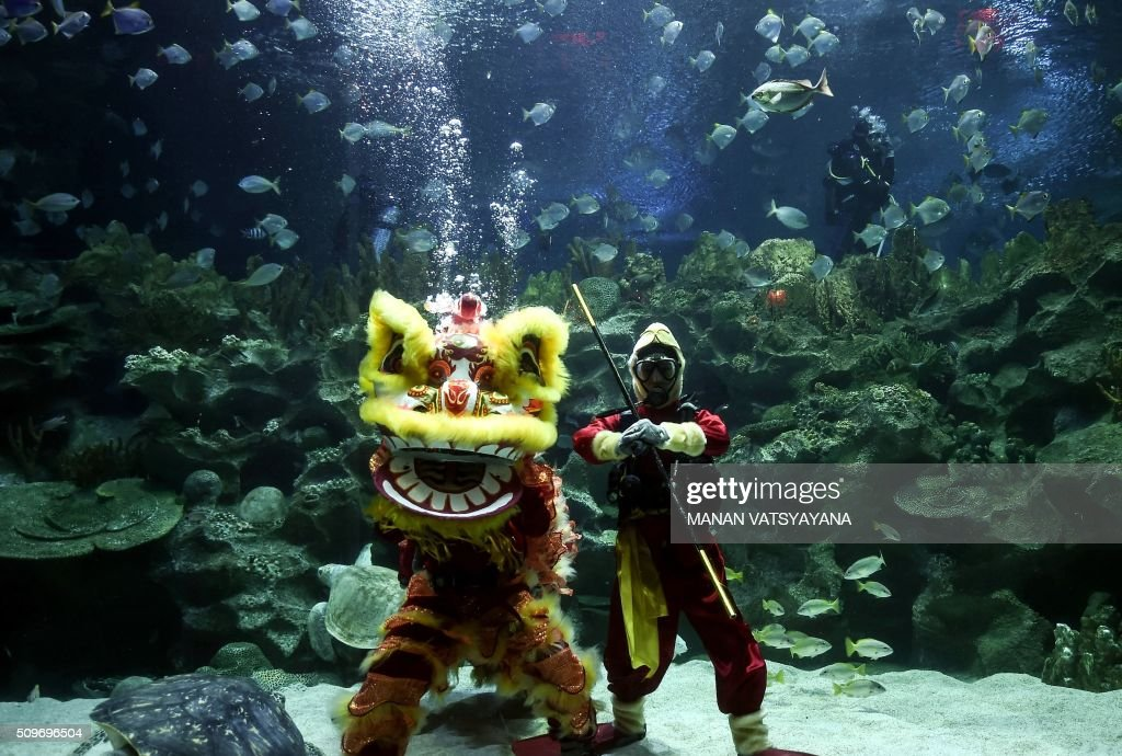 Divers dressed as a traditional Chinese 'monkey king' (R) and lion dancers perform underwater at the Aquaria KLCC in Kuala Lumpur on February 12,2016 as part of the Lunar New Year of the Monkey celebrations. AFP PHOTO / MANAN VATSYAYANA AFP PHOTO / MANAN VATSYAYANA / AFP / MANAN VATSYAYANA