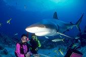 Divers Feeding Caribbean Reef Sharks