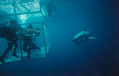 Divers in Cage near Shark
