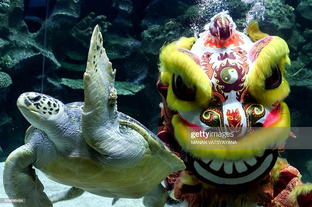 Divers perform a traditional Chinese lion dance underwater at the Aquaria KLCC in Kuala Lumpur on February 12,2016 as part of the Lunar New Year of the Monkey celebrations. AFP PHOTO / MANAN VATSYAYANA / AFP / MANAN VATSYAYANA