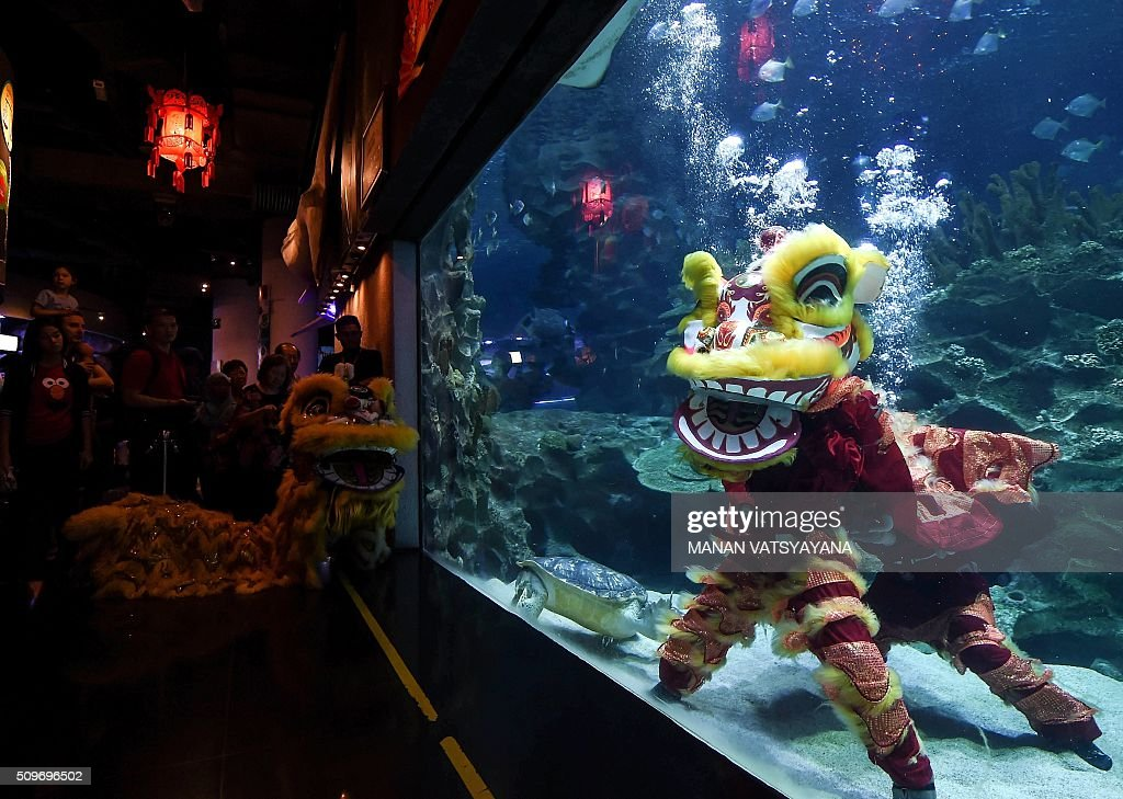 Divers perform a traditional Chinese lion dance underwater at the Aquaria KLCC in Kuala Lumpur on February 12,2016 as part of the Lunar New Year of the Monkey celebrations. AFP PHOTO / MANAN VATSYAYANA AFP PHOTO / MANAN VATSYAYANA / AFP / MANAN VATSYAYANA